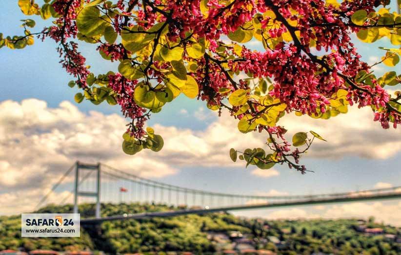 بهار استانبول