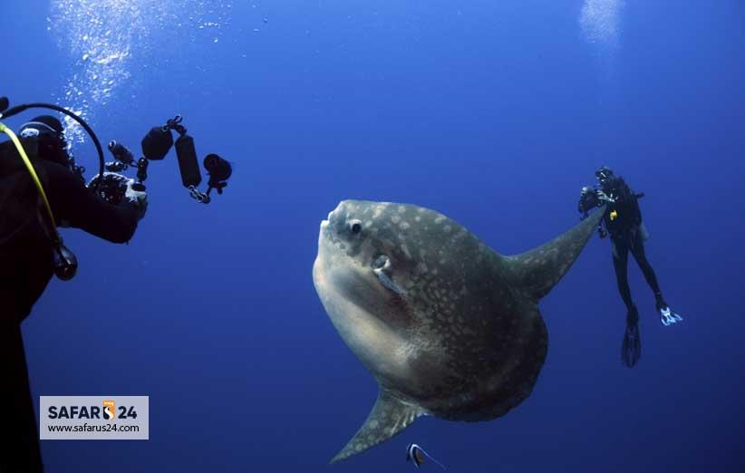 غواصی با جانوران بزرگ دریایی