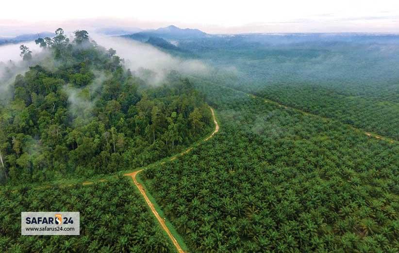 جنگل زدایی در اندونزی