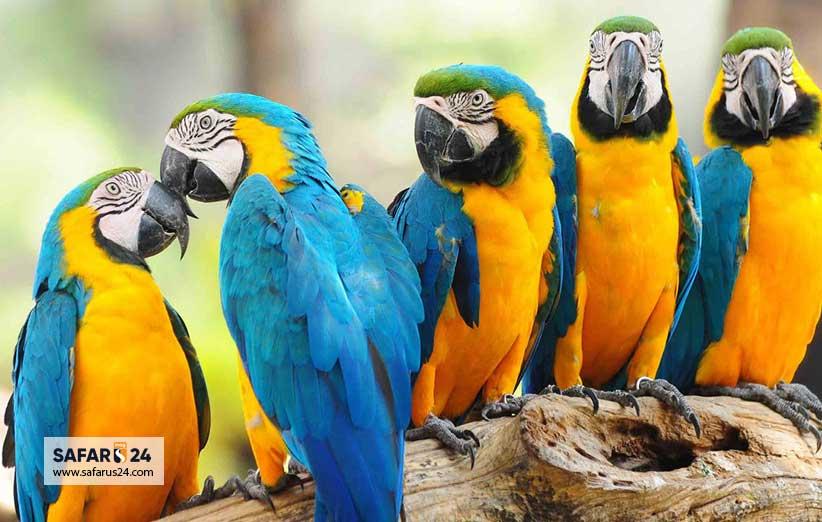 پرندگان باغ پرندگان کیش