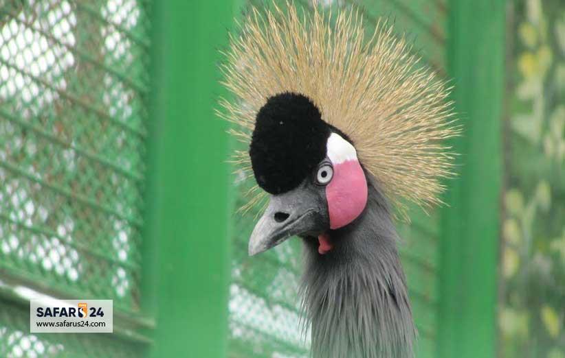 پرندگان باغ وحش وکیل آباد مشهد