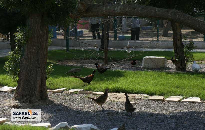 آدرس باغ پرندگان کیش