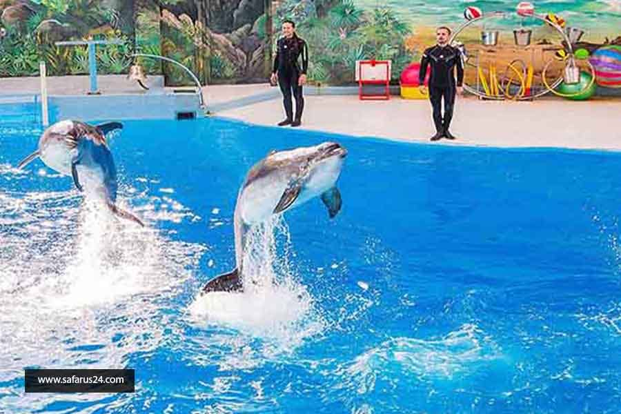 دلفین