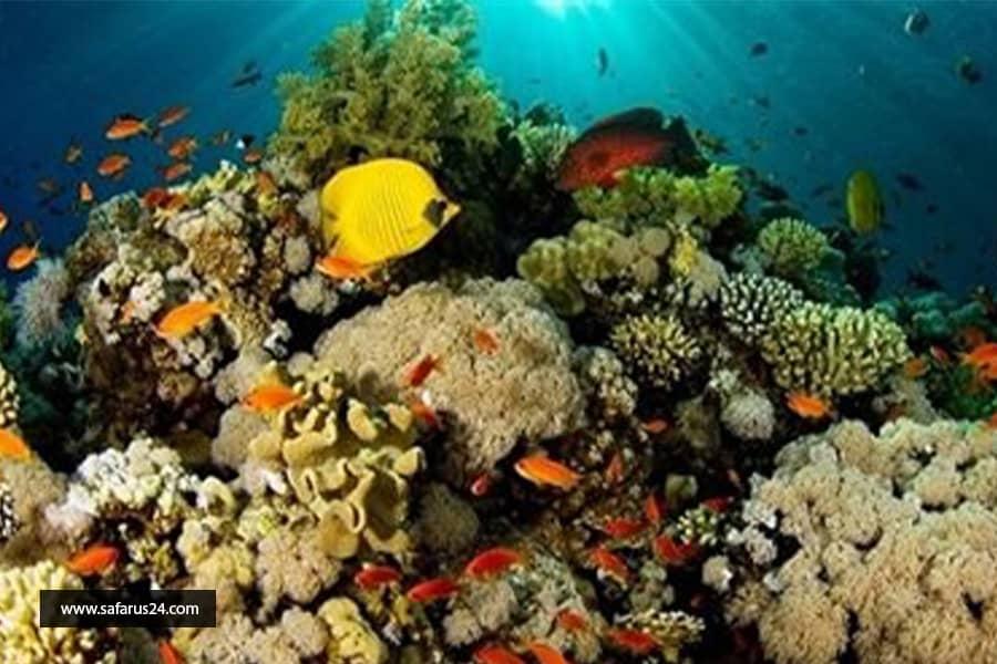 صخره مرجانی کیش
