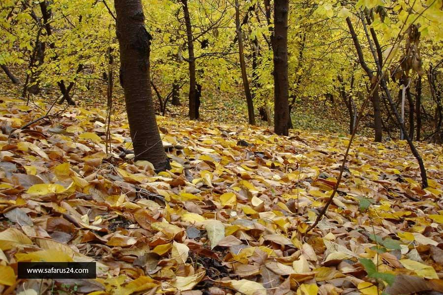 تور مشهد از آبادان ارزان پاییز
