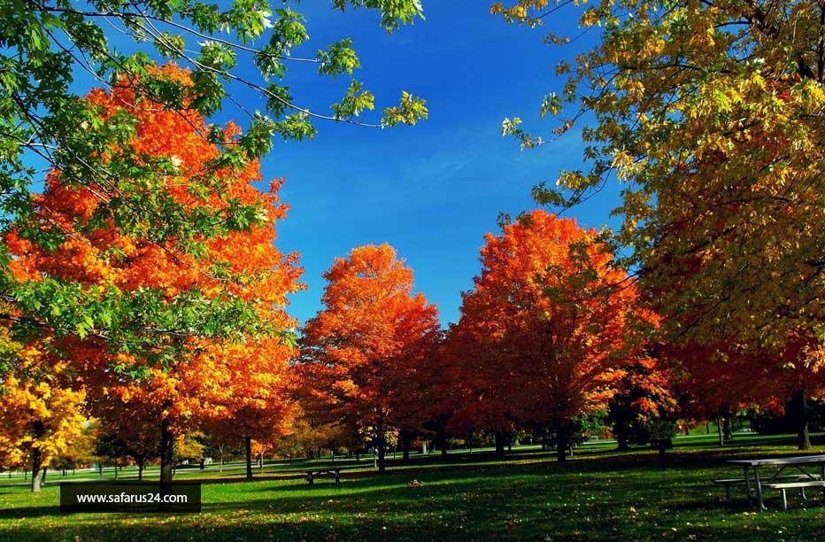 قیمت تور پاییز